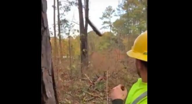 Falling Tree Shoots Massive Branch At Lumberjacks Like A Missile - Digg