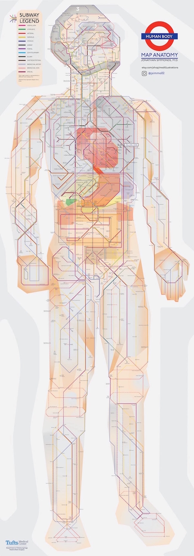 A Doctor Created A Human Anatomy Diagram In The Style Of A Subway
