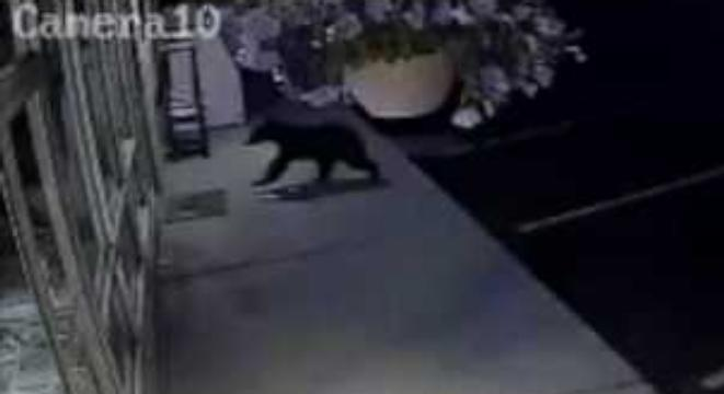 Bear Makes Valiant Attempt To Break Into Hardware Store, Bounces Off