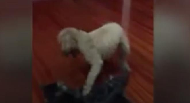 We Can't Stop Watching This 3-Second Video Of A Dog Body Slamming A
