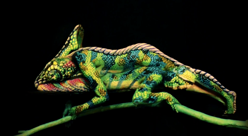 This Is Not A Chameleon - Digg