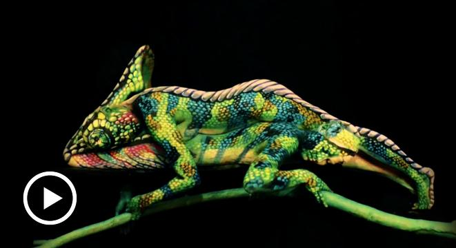 This Is Not A Chameleon