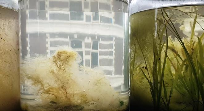 Guy Puts Salt Water And Seaweed In A Closed Jar For A Year To See What Happens, And It's Fascinating
