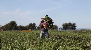 A Boost For Young, Diverse Farmers