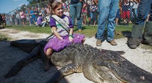 Has Gatorfest Gone Wild?