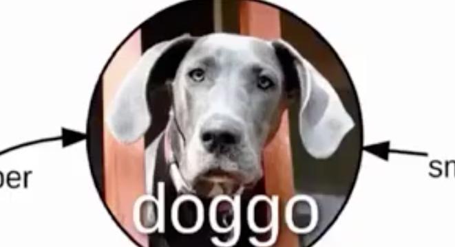 What Makes A Doggo Digg