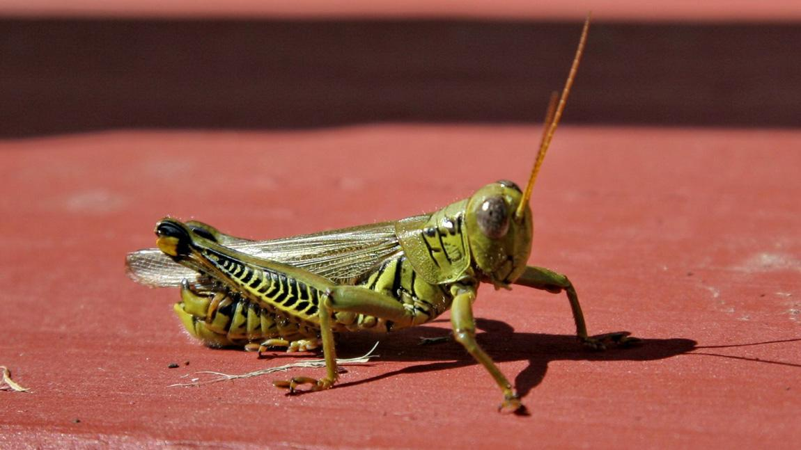 insects are dying at an alarming rate and that should terrify you