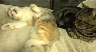This Sleep Talking Kitty Will Make You Hurt With Cuteness