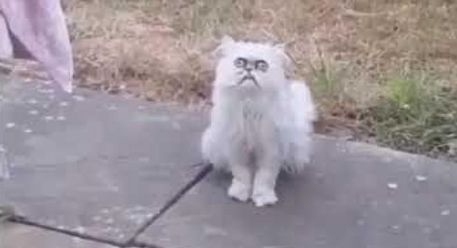 Cat In Backyard guy sees a weird-looking stray cat in his mom's backyard, loses his