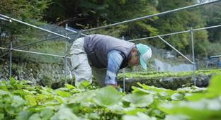 Most Restaurant 'Wasabi' Is Actually Horseradish — This Japanese Farmer Explains Why The Real Deal Is Superior