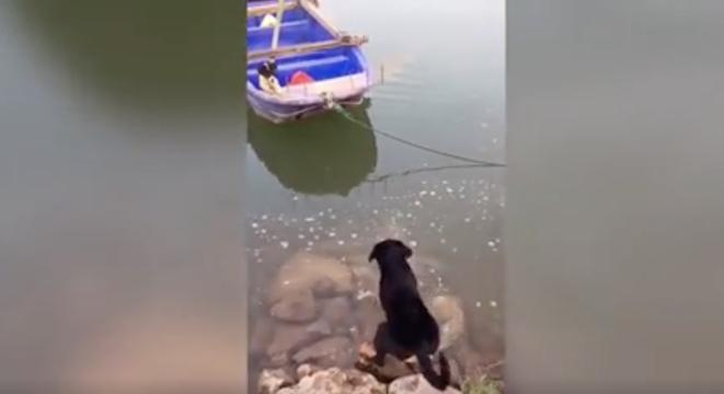 Dog Rescues His Friend Trapped On A Boat