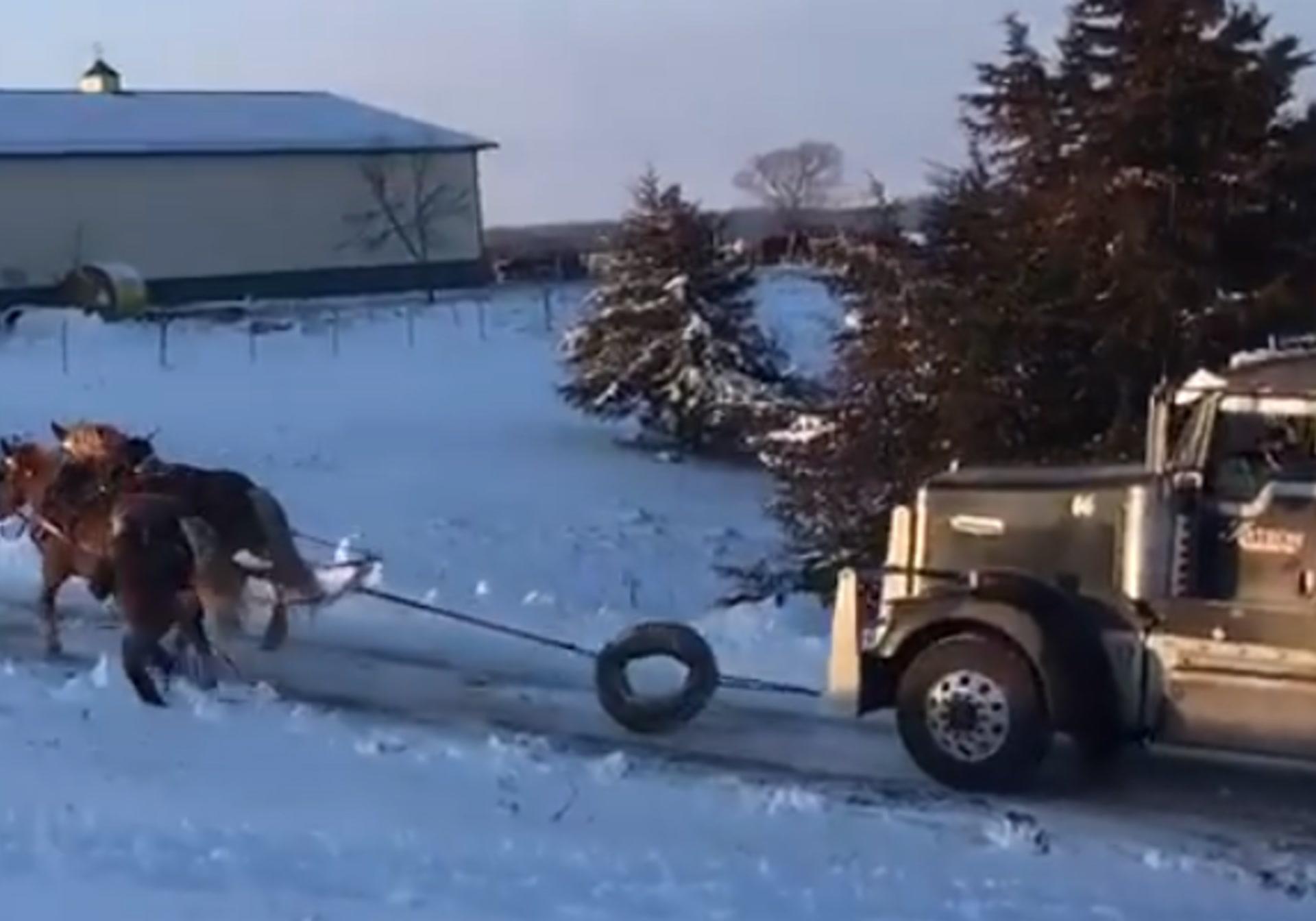 Two Draft Horses Pull A Gosh Darn Semi Truck Up An Icy Hill Digg