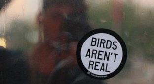 Are Birds Actually Government-Issued Drones? So Says a New Conspiracy Theory Making Waves (And Money)