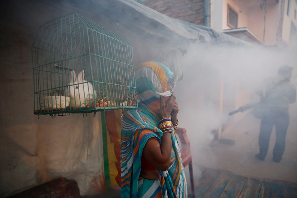Image: ​An Indian woman covers herself as a municipal worker fumigates a residential area to prevent mosquitoes from breeding in Lucknow, India, Tuesday, Sept. 22, 2015. Dengue outbreaks are reported every year after the monsoon season that runs from June to September. Many people have died from the mosquito-borne disease in the country's capital New Delhi this year.