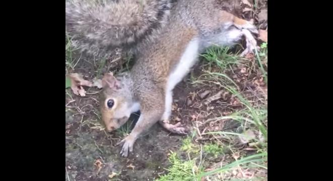 Squirrel Eats The Wrong Mushrooms, Gets Stoned Out Of Its Mind - Digg