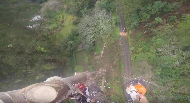 Do Not Watch This Tree Removal Video If You Are Even A Little Bit Afraid Of Heights
