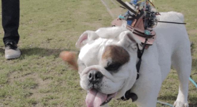 Humor, mascotas y diversiones