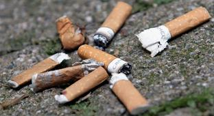 Cigarette Butts Stunt Plants' Growth