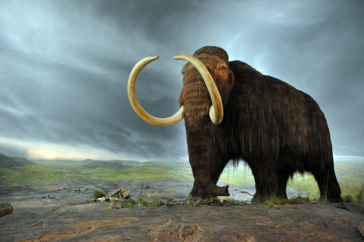 Should The Clearly Extinct Woolly Mammoth Be Reclassified As Endangered?