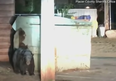 Bears Try To Rescue Their Pal Trapped Inside Dumpster, Authorities Come To Save The Day