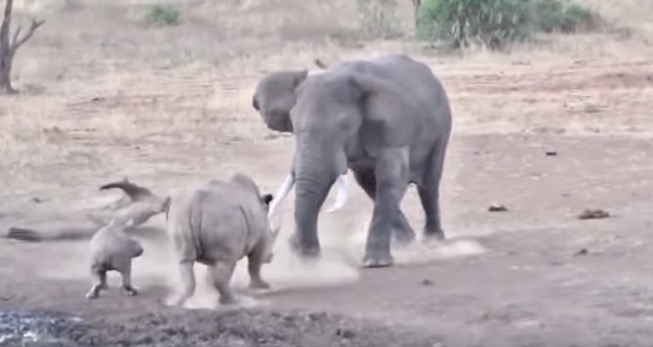 Here's A Good Reminder To Never Mess With A Fully-Grown Elephant