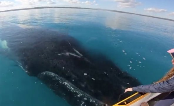These Whales Are Completely Fascinated By This Stationary Jet Ski In The Middle Of The Ocean