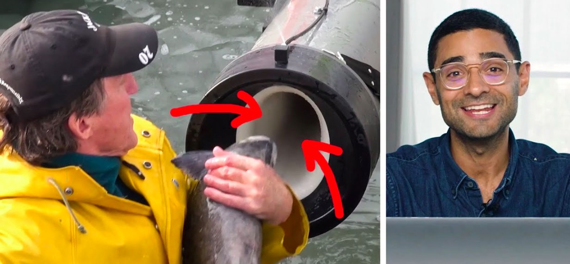 The Science Behind That Fish Cannon Video That Broke The Internet