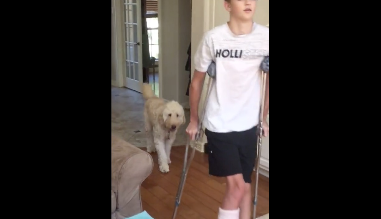 Dog Empathetically Copies Owner's Gait After Owner Breaks His Leg - Digg