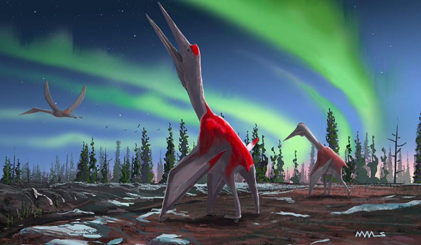 Newest Pterosaur Was Likely As Tall As A Giraffe