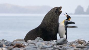 The Finalists For 2019's Comedy Wildlife Photography Awards Are In, And There Are Some Real Bellyachers