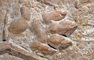 The Long, Strange Tale Of The Hand Beast Footprints