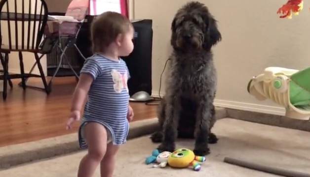 Dog Very Bluntly Teaches Toddler How To Sit - Digg