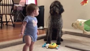 Dog Very Bluntly Teaches Toddler How To Sit