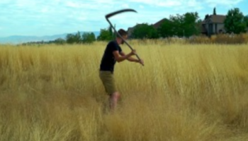 Dudes Attempt To Make Bread Out Of Rye Harvested On The Side Of The Road