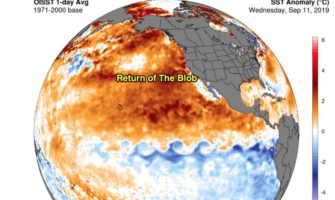 The Dreaded 'Blob' May Be Back In The Pacific Ocean