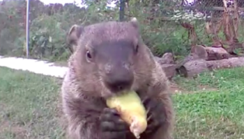 A Camera Was Set Up To Solve The Case Of The Missing Vegetables, And This Is What It Revealed