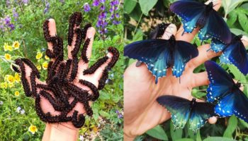 How One Man Singlehandedly Repopulated A Rare Butterfly Species In His Backyard