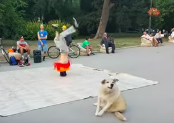 This Dog Trying To Mimic A Breakdancer Is Delightful - Digg