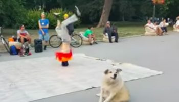 This Dog Trying To Mimic A Breakdancer Is Delightful