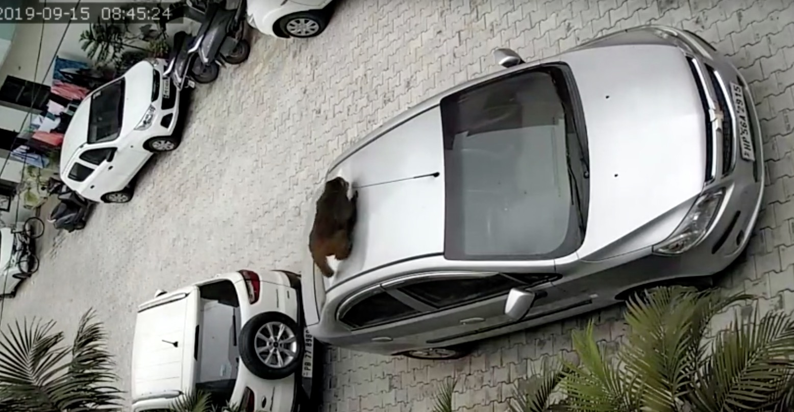 Guy Is Deeply Confused By The Huge Dent In His Car's Roof Until He Checks His Security Camera - Digg