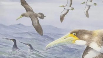'Amazing' Ancient Seabird Fossil Found In New Zealand Sparks Rethink Of Bird's Evolution