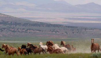 The Battle Over Wild Horses