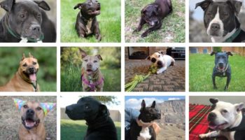 The Dogs Rescued From Michael Vick's Dogfighting Ring, Twelve Years Later