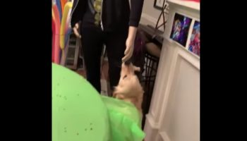 Persistent Dog Valiantly Attempts To Get This Mannequin To Pet Her