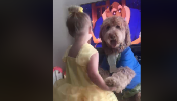 Little Girl Dressed As Belle Adorably Dances With Her Dog That Is Dressed As Beast