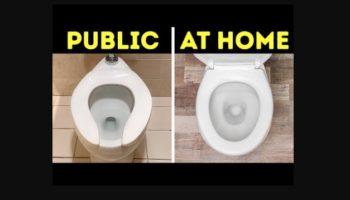 Why Are Public Toilet Seats Shaped Like A U?