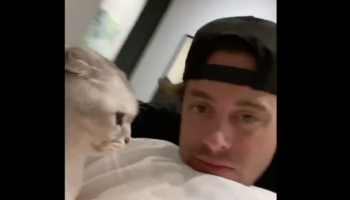 Cat Likes To Lick Owner's Face, Does Not React Well When Owner Does The Same