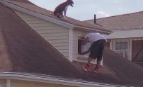 This Absolute Hero Scales A Rooftop To Rescue A Stranded Dog