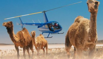 Here's A Breathtaking Short Film About A Wild Camel's Fight For Survival In The Australian Outback