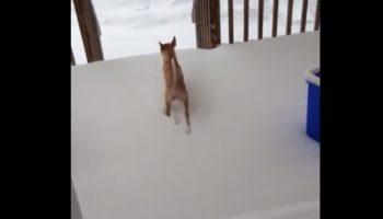 Dog That Really Wants To Go Outside Has A Hilarious Reaction When He Realizes There's Snow